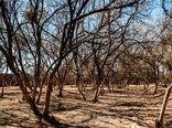 حفظ 100درصدی باغات با تامین اعتبار مقابله با خشکسالی