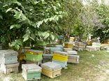 اجرای طرح آمارگیری از کلنیهای زنبور عسل