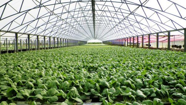تحقق 84 درصدی طرح توسعه گلخانه ها در کشور/ اختصاص 4 هزار میلیارد تومان تسهیلات بانکی برای توسعه گلخانهها