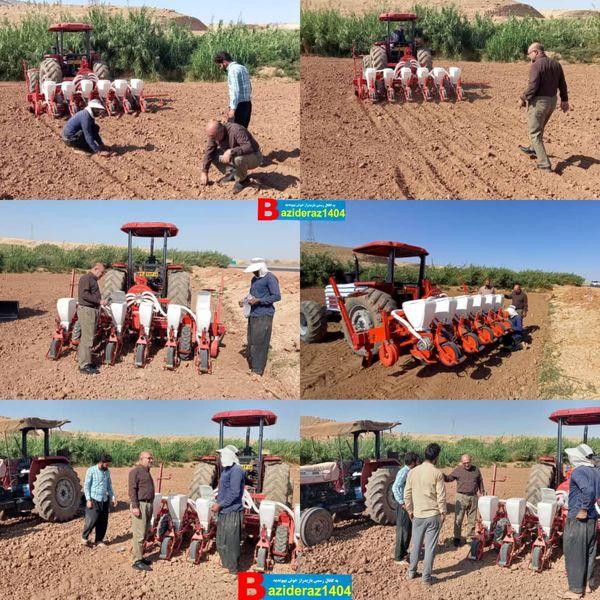 آغاز کشت بذر چغندرقند پاییزه در سطح مزارع شهرستان سرپلذهاب