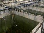تهران بالاترین تکنولوژی تولید ماهیان زینتی را در کشور دارد