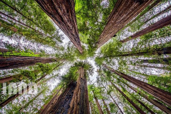 جنگلهای کالیفرنیای شمالی