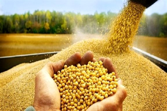 واردات بیش از ۶۹ هزار تن نهاده کشاورزی به کردستان/قیمت مرغ در کردستان نسبت به میانگین کشوری پایینتر است