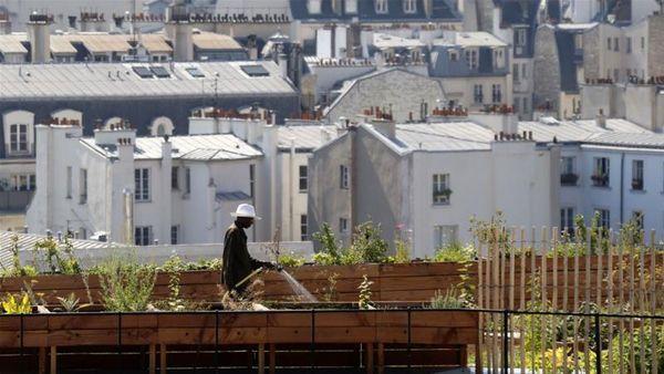 کشاورزی شهری کلید آیندهای پایدار