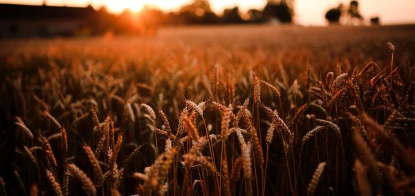 پذیرش تغییر٬ عامل پیشرفت کشاورزی