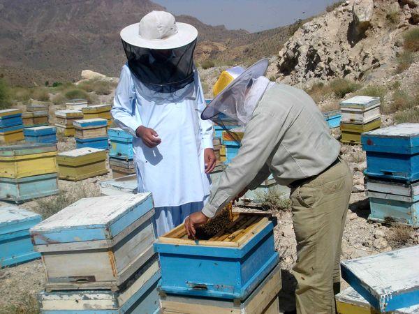 برداشت 90تن عسل در سیستان و بلوچستان