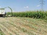 آغاز کاشت ذرت علوفهای در مزارع فریدن
