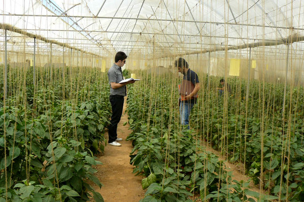 17.6 درصد از شاغلین کشور در  بخش کشاورزی فعالند