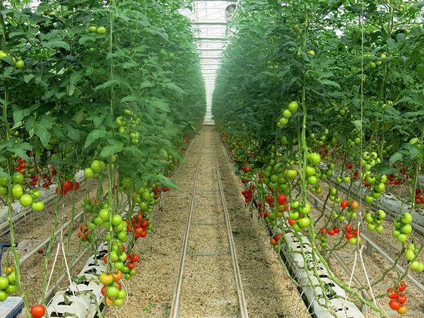 پرداخت بیش ۱۷ میلیاردی به طرح های تولیدی و صنایع تبدیلی بخش کشاورزی