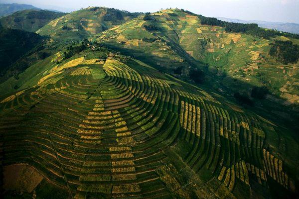 کاشت محصولات در کرتهای رواندا