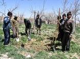 ۵۷ هزار و ۱۶ نفر از روستاییان خراسان شمالی  بیمه اجتماعی دارند
