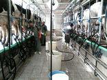 نیازی به واردات نیست 10 میلیون تن شیر خام تولید میکنیم
