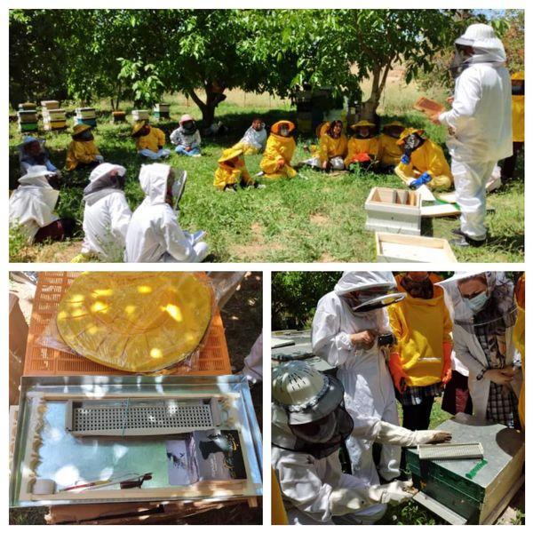 ۱۵ زنبوردار زن در قزوین با برداشت زهر، تولید بره موم و گرده زنبورعسل آشنا شدند