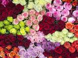 صادرات 22.7 میلیون دلاری گل و گیاه در سال 96
