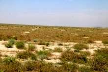 ۶۳۹ سند تک برگ برای اراضی ملی استان بوشهر صادر شد