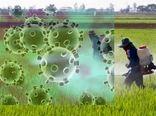 کرونا ۹۲۲ میلیارد ریال به کشاورزی ایلام خسارت وارد کرد