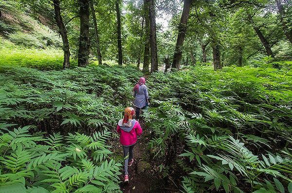 جنگلگردی، ظرفیت شاخص گردشگری طبیعی خلخال