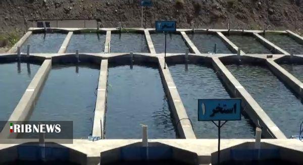 راهاندازی بزرگترین مجتمع پرورش ماهی در مریوان