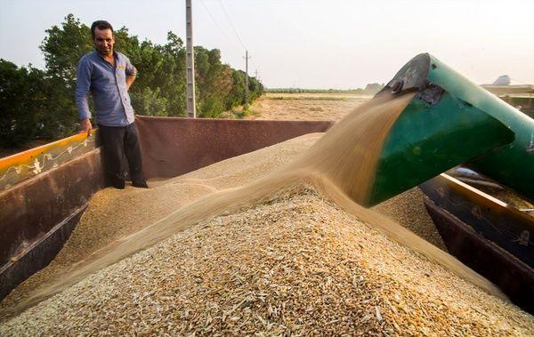 خریدتضمینی 7هزار و 600 تن گندم  از کشاورزان استان قزوین
