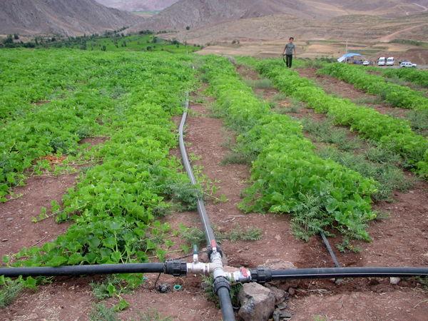 41 هزار متر لوله در روستاهای شهرستان قزوین توزیع شد
