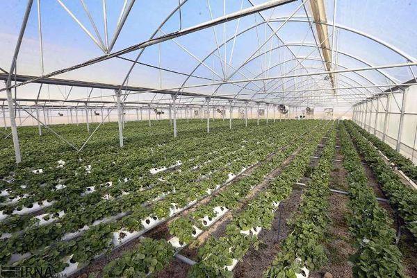 کشت گلخانه راهبردی مناسب برای جهش تولید