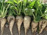 برداشت محصول چغندر قند در شهرستان چرداول آغاز شد
