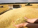 آغاز خرید گندم در خراسان شمالی
