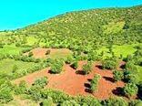 رفع تداخل از اراضی ملی و زراعی شهرستان مریوان