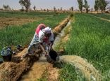 سرمایهگذاری در کشاورزی از مهاجرت جوانان جلوگیری میکند