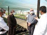بازدید از پروژه کشت و صنعت مکران در استان سیستان و بلوچستان