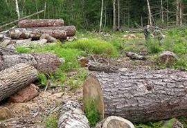 گروگان گیری و درگیری مسلحانه حین عملیات برخورد با متخلفین قطع و قاچاق درختان بلوط