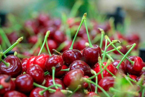 ۳۰ درصد از محصولات باغی چهارمحال و بختیاری به ضایعات تبدیل میشود