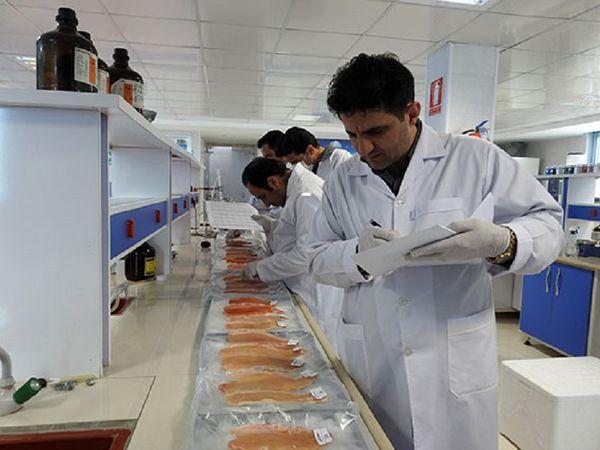 ذخیره سازی 400  تن ماهی قزلآلا در چهارمحال و بختیاری