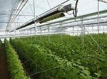 توسعه گلخانه ها در استان در راستای حفظ محیط زیست اجرا می شود
