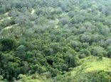 تامین اعتبار برای آبیاری مهمترین چالش توسعه اراضی جنگلی در خراسان شمالی