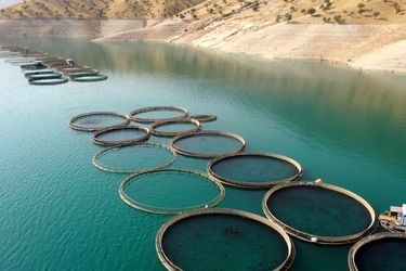 مزارع پرورش ماهی _اردل/عکس روز