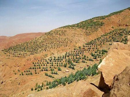 احداث باغ دیم در اراضی شیب دار مرودشت