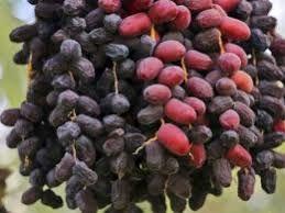 مسائل و مشکلات کشاورزی و دامداری شهرستان ریگان مورد بررسی قرار گرفت