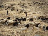 خراسان شمالی به لحاظ خرید دام عشایر، رتبه دوم کشور را دارد