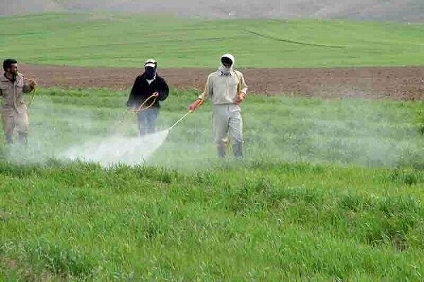 بازدید مستمر کارشناسان حفظ نباتات از مزارع، باغات و گلخانه ها جهت کنترل آفات و بیماریها