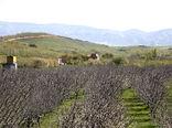 کشاورزان آذربایجانی همراه با سرما اشک ریختند