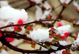 دمای هوا سهشنبه و چهارشنبه به منفی 8 درجه میرسد