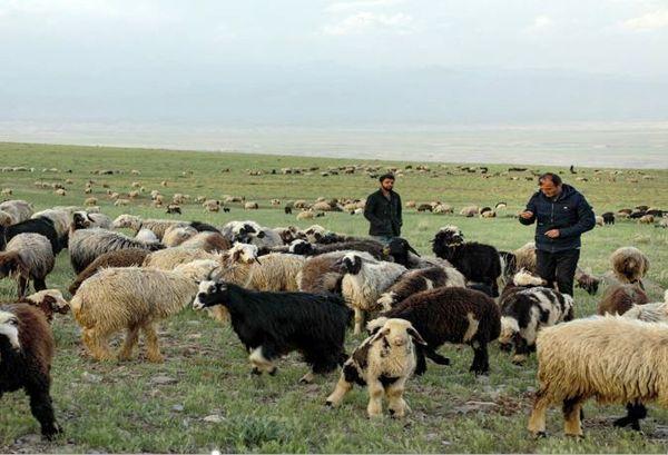 کرونا ۱۲۰ میلیارد ریال به عشایر خراسان شمالی خسارت زد