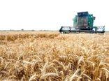 پیش بینی کاهش تولید گندم در چهارمحال و بختیاری