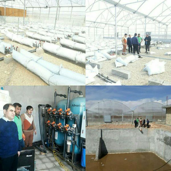اولین گلخانه هیدروپونیک اسفراین در مراحل پایانی ساخت