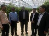رونق اقتصادی با تسریع در راه اندازی شهرک های کشاورزی