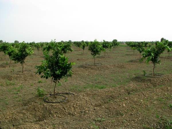 2500 هکتار از باغهای جویبار به سامانه نوین آبیاری مجهز شد