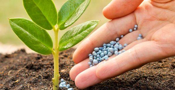 5 میلیون تن برآورد میزان کود شیمیایی برای سال زراعی آینده