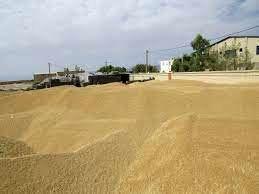 ۲۶ هزار تن گندم برای خراسان شمالی تامین شد