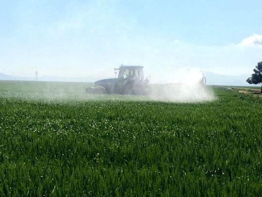 مزارع گندم بذری خرامه محلول پاشی شد